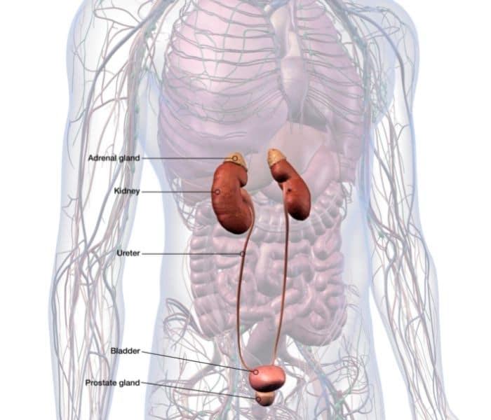 Nhiễm trùng hệ tiết niệu gây ra tiểu buốt ra máu ở nam giới, nước tiểu đục và có mùi hôi