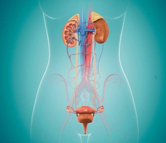 tiểu buốt, tiểu rắt sau khi quan hệ ở nữ, buồn tiểu sau khi quan hệ ở nữ giới, tiểu buốt tiểu rắt sau khi quan hệ ở nữ, đi tiểu bị buốt sau khi quan hệ ở nữ, tiểu buốt sau khi quan hệ ở nữ, sau khi quan hệ bị đi tiểu buốt ở nữ, quan hệ xong đi tiểu buốt có sao không, đi tiểu đau rát sau khi quan hệ ở nữ, tiểu buốt sau khi quan hệ ở nữ giới, đi tiểu buốt sau khi quan hệ ở nữ giới, quan hệ xong hay bị tiểu buốt, tiểu buốt sau quan hệ là gì, mắc tiểu liên tục sau khi quan hệ, đi tiểu dắt và buốt sau khi quan hệ, bị tiểu buốt sau khi quan hệ, đi tiểu nhiều sau khi quan hệ ở nữ giới, đi tiểu bị buốt sau khi quan hệ, đi tiểu buốt sau khi quan hệ, đi tiểu đau rát sau khi quan hệ, bị tiểu dắt và buốt sau khi quan hệ, sau khi quan hệ đi tiểu bị đau rát, bị tiểu rắt và buốt sau khi quan hệ, tiểu gắt buốt sau khi quan hệ, quan hệ xong đau rát tiểu buốt, sau khi quan hệ bị đi tiểu rắt, tại sao quan hệ xong lại bị tiểu buốt, cách trị tiểu rắt sau khi quan hệ, đau rát tiểu buốt sau khi quan hệ, phụ nữ quan hệ xong đi tiểu buốt, đi tiểu rát buốt sau khi quan hệ, sau khi quan hệ bị rát khi đi tiểu, sau khi quan hệ bị đi tiểu buốt, quan hệ xong đi tiểu bị buốt, đi tiểu đau rắt sau khi quan hệ ở nữ, sau khi quan hệ hay bị tiểu buốt, tiểu buốt ở nữ sau khi quan hệ, đi tiểu bị đau buốt sau khi quan hệ, quan hệ xong đi tiểu buốt rát, cảm giác buồn tiểu sau khi quan hệ, đau rát khi đi tiểu sau khi quan hệ, sau khi quan hệ bị mắc tiểu liên tục, đi tiểu đau buốt sau khi quan hệ, sau khi quan hệ đi tiểu đau buốt, sau khi quan hệ bị đi tiểu nhiều, đau sau khi quan hệ tiểu buốt, quan hệ lần đầu đi tiểu buốt, đi tiểu buốt ra máu sau khi quan hệ ở nữ giới, quan hệ xong đi tiểu bị rát, tiểu rắt tiểu buốt sau khi quan hệ, sau khi quan hệ đi tiểu bị đau rát ở nữ, mắc tiểu nhiều lần sau khi quan hệ, đau buốt khi đi tiểu ở nữ sau khi quan hệ, sau khi quan hệ bị đái buốt, đau bụng dưới tiểu buốt sau khi quan hệ, quan hệ nhiều bị tiểu buốt, quan hệ tình dục xong đi tiểu buốt, sau khi quan hệ xong đi t
