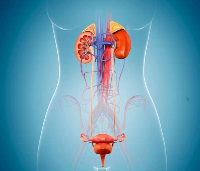 Sự nhiễm trùng gây kích thích niệu đạo, bàng quang dẫn đến tình trạng tiểu són, tiểu nhiều, tiểu buốt