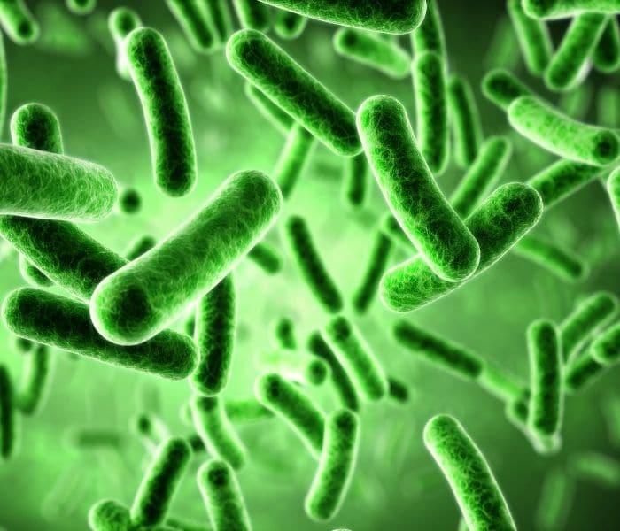 Các vi sinh vật tấn công hệ tiết niệu gây bệnh, chủ yếu là vi khuẩn E.coli