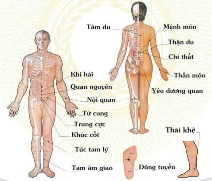 Có hơn 600 huyệt đạo khác nhau nằm rải khắp cơ thể