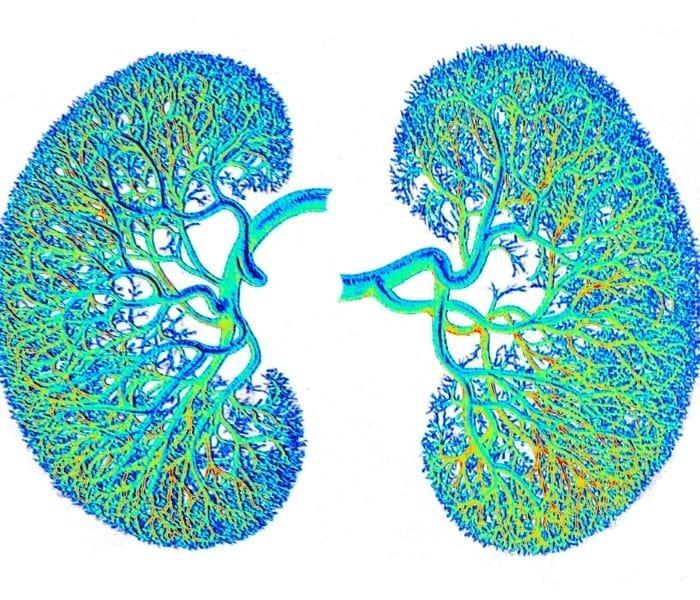 Thận âm hư ở phụ nữ có thể dẫn tới bệnh ở hệ tiết niệu, viêm phụ khoa, nhanh lão hóa, sạm da